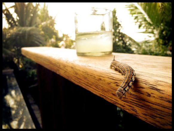 Caterpillar Cocktail Hour