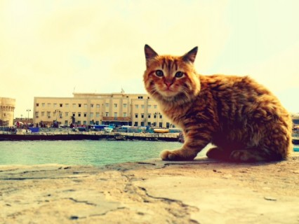 Egyptian cat at the Citadel in Alexandria