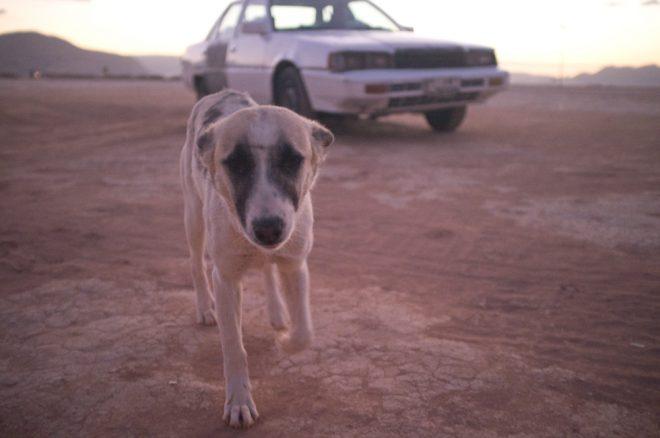 Wadi Rum dog