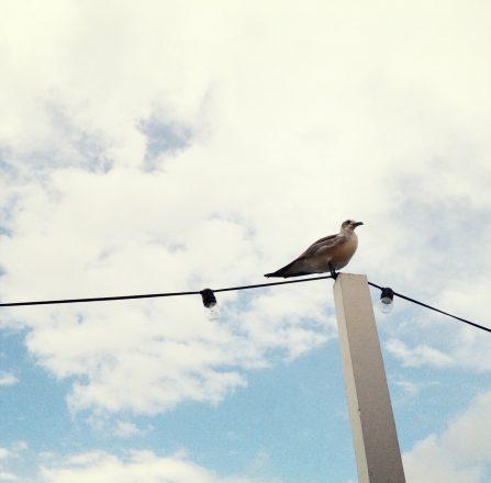Bird at the Standard