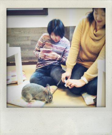Bunnies + smartphones = photo shoot