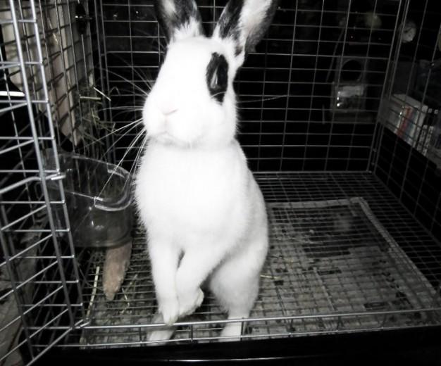 Mai's pet rabbit photo