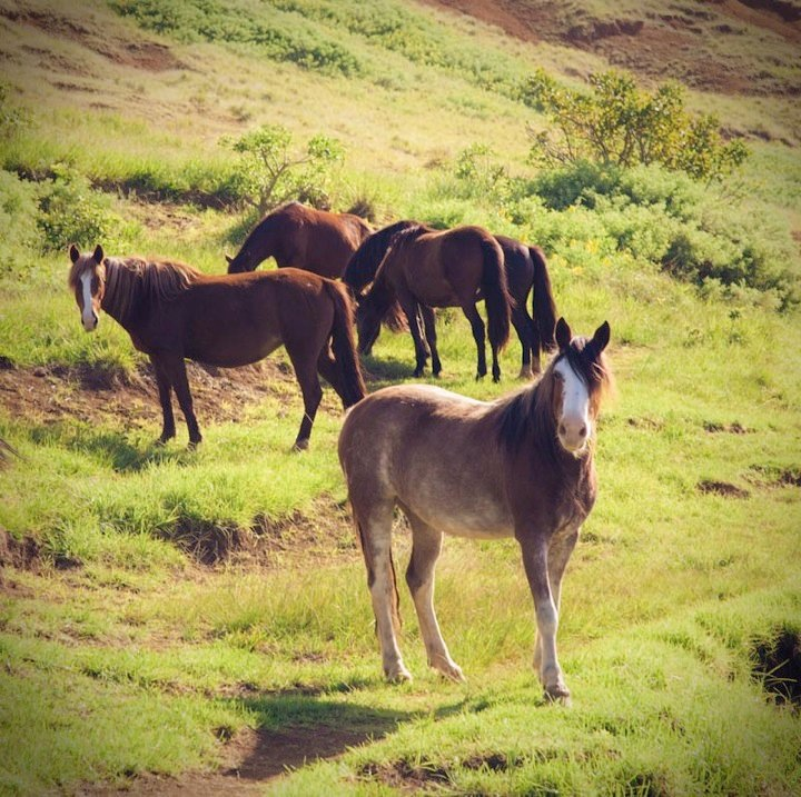Wild horses on a green valley