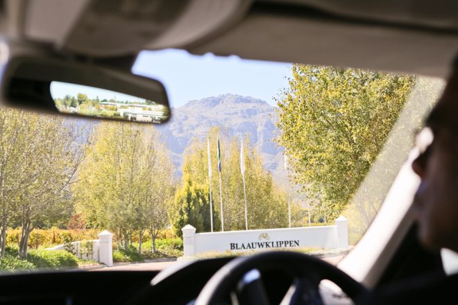 Arriving at Blaauwklippen