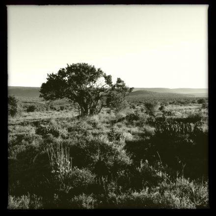 Hipstamatic safari