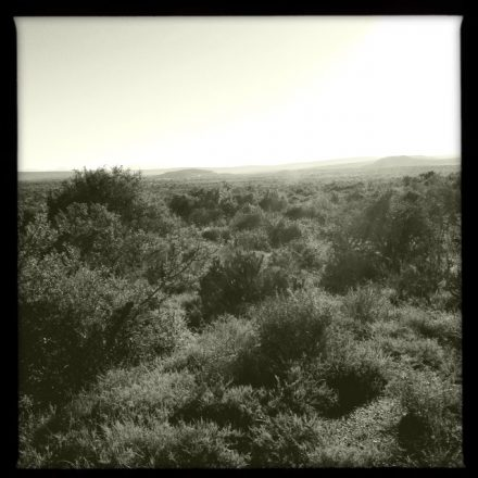 I used Hipstamatic to get some shots of the varied terrain of Kwandwe