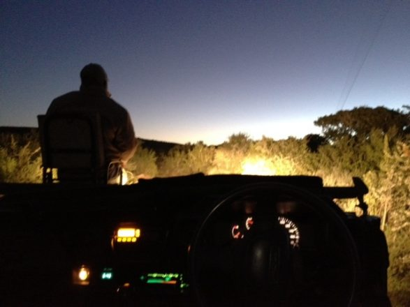 Nocturnal Game Drive