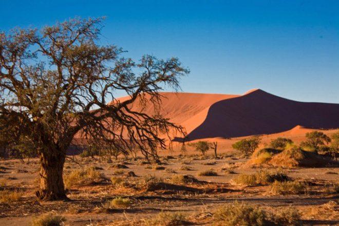 The dunes of Sossusvlei in the Namib Desert 2