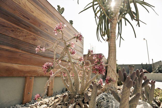 Hotel Lautner - desert flowers