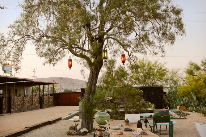 Mojave Sands - courtyard tree