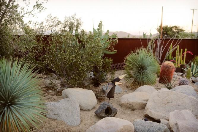 Mojave sands desert garden
