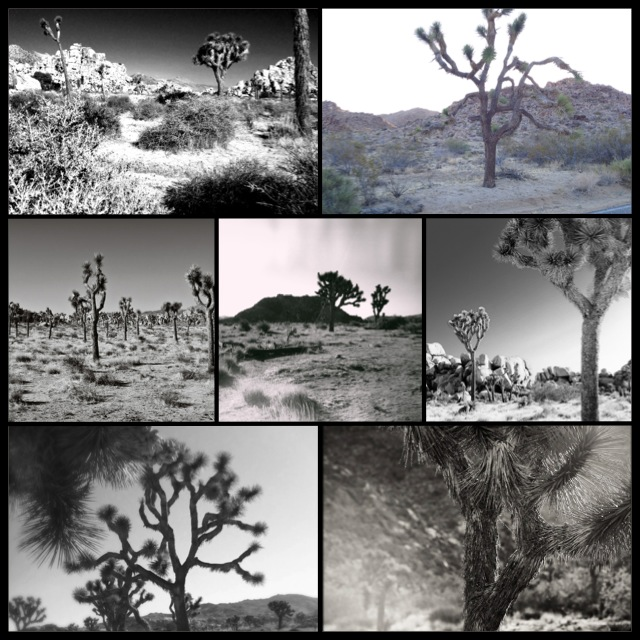 Joshua Tree grid