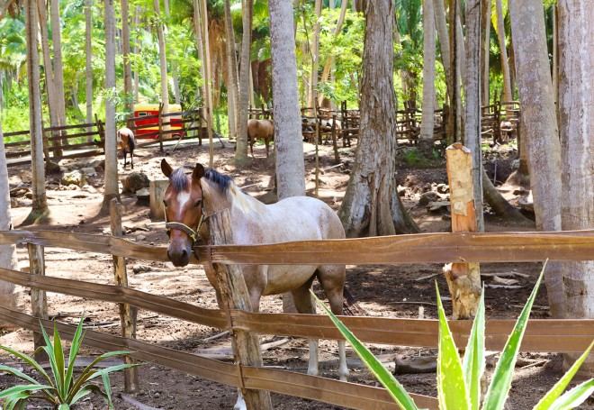 Imanta horse