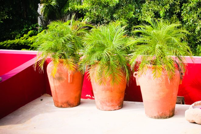 Potted plants in the Observatorio