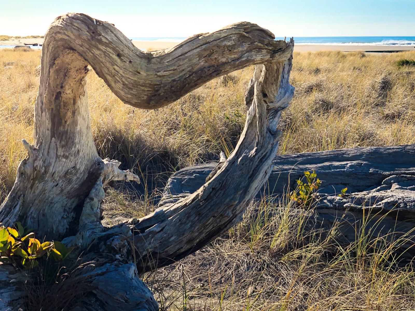 prairie-creek-redwood-state-park-img_2181